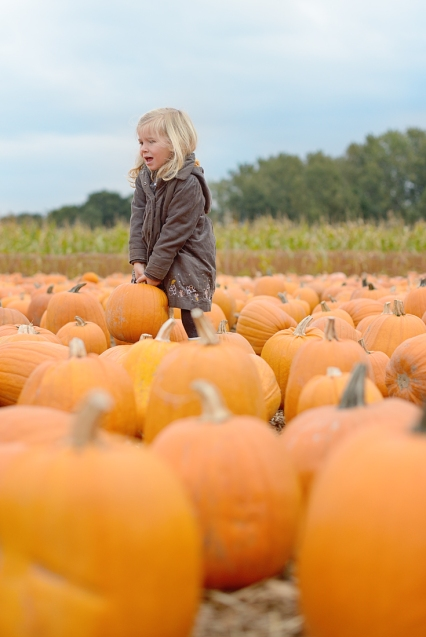 pumpkin-patch_02-copy