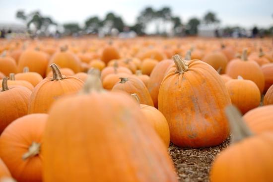 pumpkin-patch_08-copy