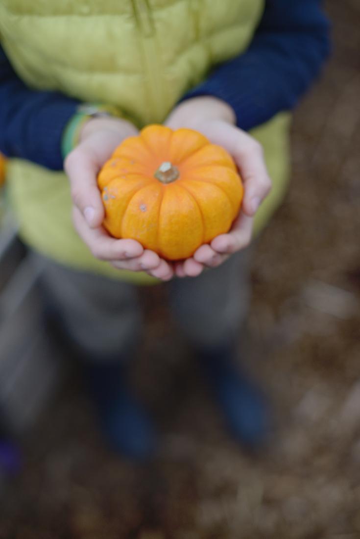 pumpkin-patch_09-copy