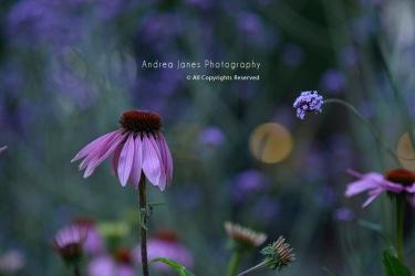 flowers-sandra-and-helena-01-copy