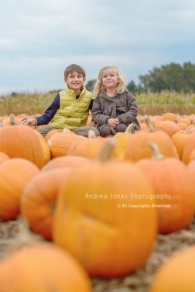 pumpkin-patch_01-copy