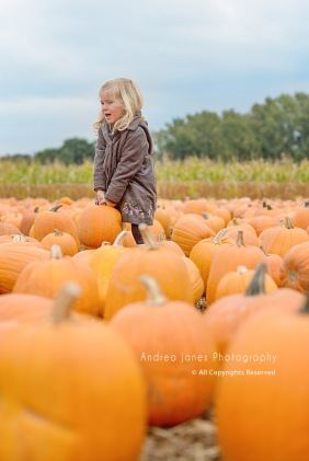 pumpkin-patch_02-copy